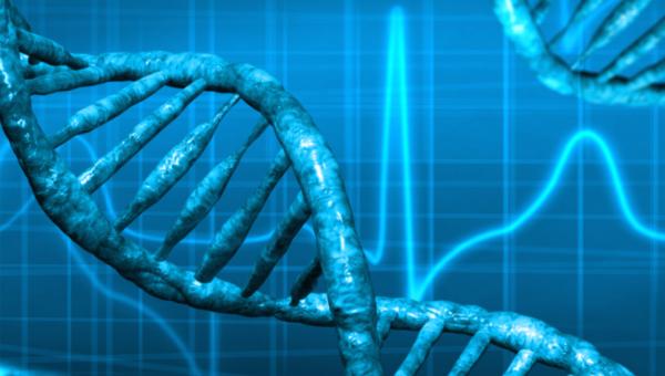 DestinHaus DNA